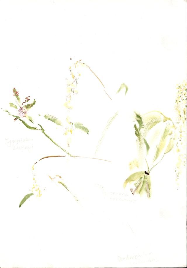 Dendrochilum cobbianum, Zygopetalum Mackay's, Bifrennaria Harrisoniae